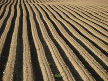 Abstract Lines on Agricultural Field royalty free stock images