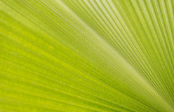 Abstract lines green leaf texture Stock Image