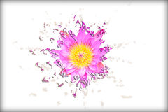 Abstract liquify pink lotus. Is a symbol of Buddhism Royalty Free Stock Image