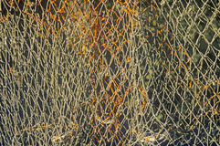 Abstract of Lobster Net, Muscongus Bay in New Harbor ME Royalty Free Stock Photography