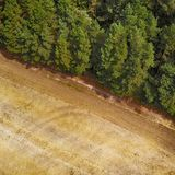 Abstract looking aerial view of a harvested yellow wheat field next to a green coniferous forest.  royalty free stock photo