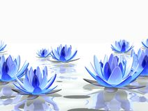 Abstract lotus Royalty Free Stock Image