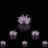 Abstract lotus background Stock Photos