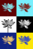 Abstract of Lotus Royalty Free Stock Images