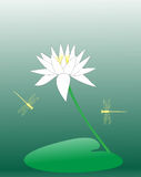 Abstract lotus flower Stock Image
