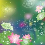 Abstract lotus flower background. Abstract lotus flower and waterdrop background, flower greeting card Royalty Free Stock Photo