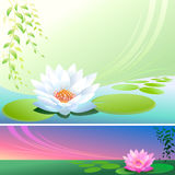 Abstract Lotus Flower In a Pond - Vector Backgroun. Beautiful Lake and divine white lotus flower creates a perfect background Vector Illustration