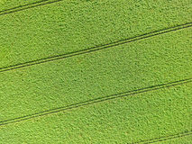 Abstract luchtbeeld van een groen gebied, als achtergrond en te Royalty-vrije Stock Afbeelding