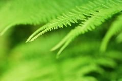 Abstract lush forest green fern background Stock Images