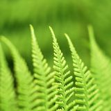 Abstract lush forest green fern background Royalty Free Stock Photography