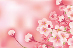 Abstract luxury cherry blossom Royalty Free Stock Photos