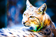 Abstract lynx portrait. Portrait of a lynx in abstract coloristic style Stock Photo