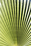 Abstract macro desert plant. Green desert plant design with lines radiating from center Stock Images