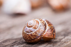 Abstract macro detailed photo of spiral shell on wooden surface Stock Images