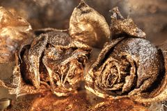 Abstract macro fine-art background with golden roses and water drops. Symbol of love, wealth, rich. Abstract macro fine-art background with golden roses and stock photos