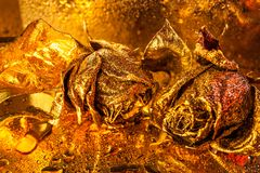 Abstract macro fine-art background with golden roses and water drops. Symbol of love, wealth, rich. Abstract macro fine-art background with golden roses and royalty free stock photos
