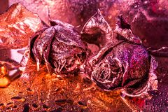Abstract macro fine-art background with golden roses and water drops. Symbol of love, wealth, rich. Abstract macro fine-art background with golden roses and stock image