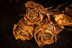 Abstract macro fine-art background with golden roses and water drops. Symbol of love, wealth, rich. Abstract macro fine-art background with golden roses and royalty free stock photography