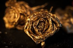Abstract macro fine-art background with golden roses and water drops. Symbol of love, wealth, rich. Abstract macro fine-art background with golden roses and stock photography