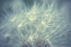 Abstract macro flower background Stock Photography