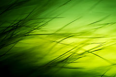 Abstract macro of fur in green tones. Stock Images