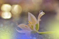 Beautiful flowers reflected in the water,artistic concept.Tranquil abstract closeup art photography.Floral fantasy design. Abstract macro photo with Flowers and royalty free stock image