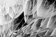 Abstract macro photo of plant seeds. Black and white Royalty Free Stock Image