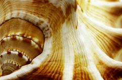 Abstract macro shells Royalty Free Stock Photo