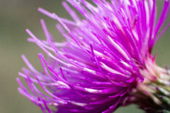 Abstract macro shot of the flower. Macro shot of flower with petals with pestle and stamens visible Royalty Free Stock Image