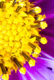 Abstract macro shot of the flower. Macro shot of flower with petals with pestle and stamens visible Stock Photos