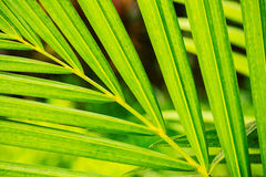 Abstract Macro of Tropical Leaf Royalty Free Stock Photos