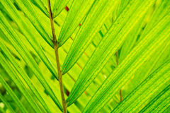 Abstract Macro of Tropical Leaf Stock Image