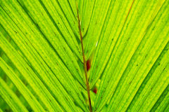 Abstract Macro of Tropical Leaf Royalty Free Stock Image
