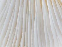 Abstract macrobeeld als achtergrond van paddestoel Royalty-vrije Stock Foto