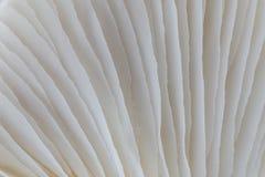 Abstract macrobeeld als achtergrond van paddestoel Royalty-vrije Stock Fotografie