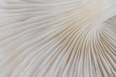 Abstract macrobeeld als achtergrond van paddestoel Royalty-vrije Stock Foto's