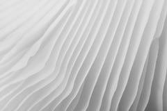 Abstract macrobeeld als achtergrond van paddestoel Stock Foto's