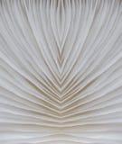 Abstract macrobeeld als achtergrond van paddestoel Stock Fotografie