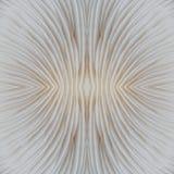 Abstract macrobeeld als achtergrond van paddestoel Stock Afbeeldingen