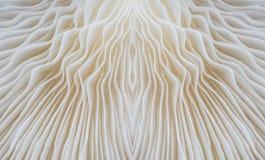 Abstract macrobeeld als achtergrond van sajor-Cajupaddestoel Royalty-vrije Stock Fotografie