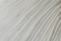 Abstract macrobeeld als achtergrond van sajor-Cajupaddestoel Royalty-vrije Stock Foto