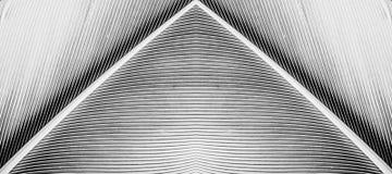 Abstract macrobeeld als achtergrond van veer Stock Afbeelding