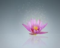 Abstract magic beautiful pink lotus Royalty Free Stock Images