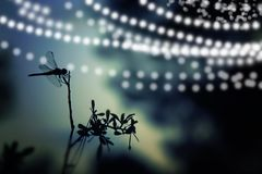 Abstract and magical image of dragonfly silhouette and Firefly flying in the night forest. Fairy tale concept. Abstract and magical image of dragonfly Royalty Free Stock Photos