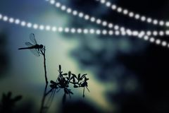 Abstract and magical image of dragonfly silhouette and Firefly flying in the night forest. Fairy tale concept. Abstract and magical image of dragonfly Royalty Free Stock Photo