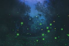Abstract and magical image of Firefly flying in the night forest. Fairy tale concept. Abstract and magical image of Firefly flying in the night forest. Fairy Royalty Free Stock Images