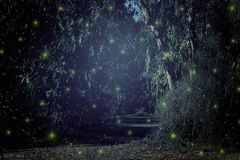Abstract and magical image of Firefly flying in the night forest. Fairy tale concept. Abstract and magical image of Firefly flying in the night forest. Fairy Stock Photos