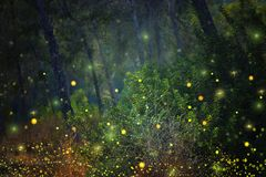 Abstract and magical image of Firefly flying in the night forest. Fairy tale concept. Abstract and magical image of Firefly flying in the night forest. Fairy Royalty Free Stock Photo