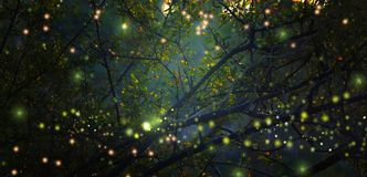 Abstract and magical image of Firefly flying in the night forest. Fairy tale concept. Abstract and magical image of Firefly flying in the night forest. Fairy Stock Images