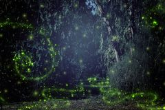 Abstract and magical image of Firefly flying in the night forest. Fairy tale concept. Abstract and magical image of Firefly flying in the night forest. Fairy Stock Image